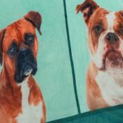Cobertor Avulso King Flanelado com Estampa Digital 280 gramas/m² - Big Dogs - Dui Design
