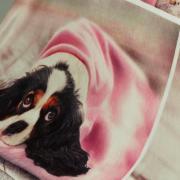 Cobertor Avulso Solteiro Flanelado com Estampa Digital 300 gramas/m² - Dog Dream - Dui Design