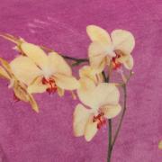 Cobertor Avulso Solteiro Flanelado com Estampa Digital 280 gramas/m² - Orquídeas Cereja - Dui Design