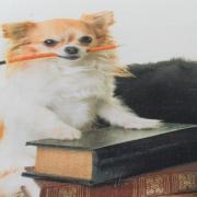 Cobertor Avulso Casal Flanelado com Estampa Digital - The Dogs - Dui Design